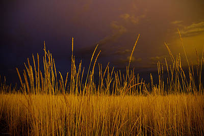 Photograph - Fields Of Gold by Gray  Artus