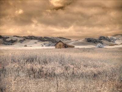 Fields Of Gold Art Print by Jane Linders