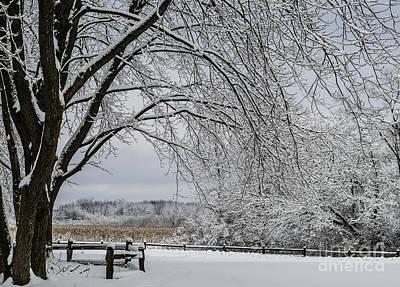 Photograph - Fields Of Nemo Snow by Deborah Smolinske