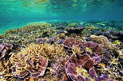 Fields Of Robust Coral Art Print by David Doubilet