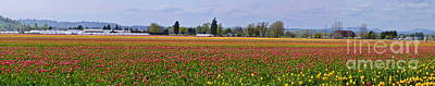 Photograph - Fields Of Tulips by Ansel Price