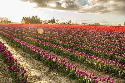 Fields Of Tulips Original by Kerry Langel