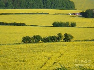 Fields Of Yellow Art Print by Ann Fellows