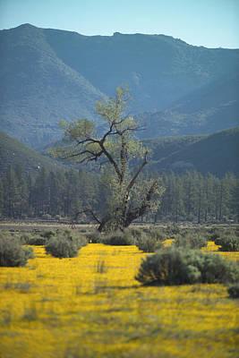 Fields Of Yellow Foxglove Art Print by Scott Campbell