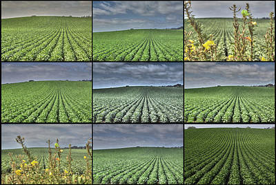 Photograph - Fields Panel by SC Heffner