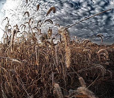 Photograph - Fierce Grasses by Kimberleigh Ladd
