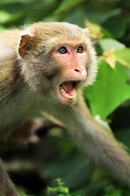 Monkey Of Kam Sham Country Park Art Print