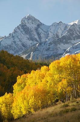 Aspens Photograph - Fiery Aspen Landscape by Aaron Spong