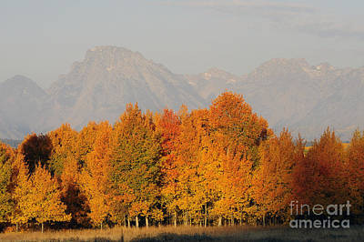 Photograph - Fiery Aspens by Deby Dixon