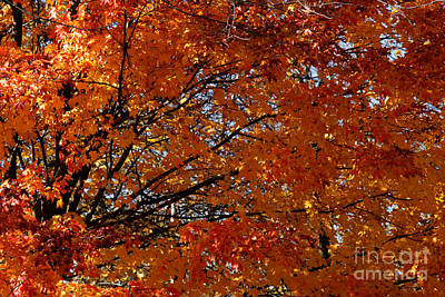 Photograph - Fiery Autumn by Linda Shafer