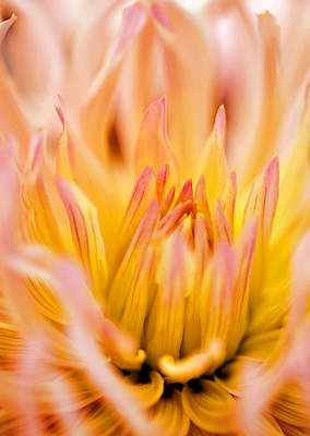 Photograph - Fiery Dahlia by Marilyn Hunt
