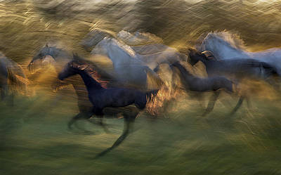 Motion Photograph - Fiery Gallop by Milan Malovrh