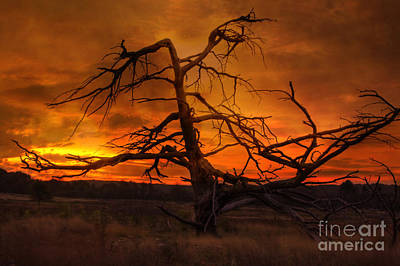 Photograph - Fiery Sunrise by Photography by Laura Lee