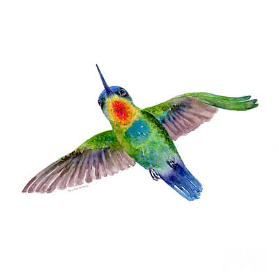 Fiery-throated Hummingbird Art Print