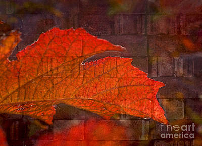 Photograph - Fiery Wall by Valerie Fuqua