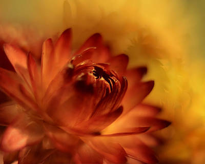 Photograph - Fiery by Ann Bridges