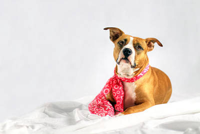Dog Lovers Photograph - Fifty Shades Of Pink by Shelley Neff