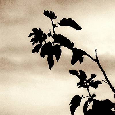 Photograph - Fig Tree In Sepia by Sarah Loft
