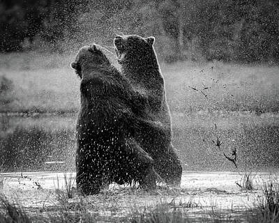 Brown Bear Photograph - Fight by Siv Wester