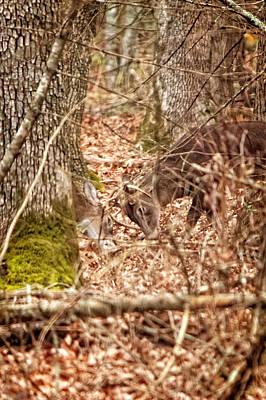 Photograph - Fighting Bucks by Lars Lentz