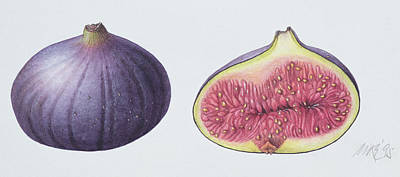 Food And Beverage Drawing - Figs by Margaret Ann Eden