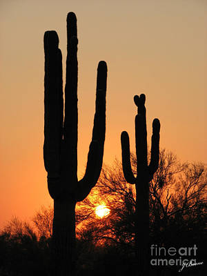 Photograph - Figured Saguaro by Jessica Boone