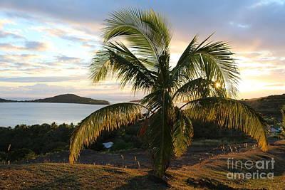 Studio Grafika Vintage Posters - Fiji Palm tree by Michael Paskvan