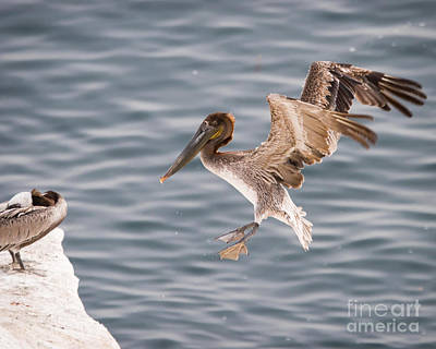 Photograph - Final Approach by Dale Nelson