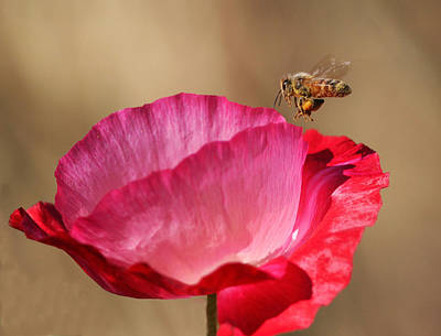 Poppy Wall Art - Photograph - Final Approach by Gary Wing