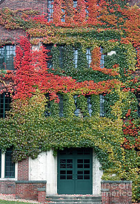 Photograph - Final Farewell Wmu Dorm In Autumn Ivy by Penny Hunt