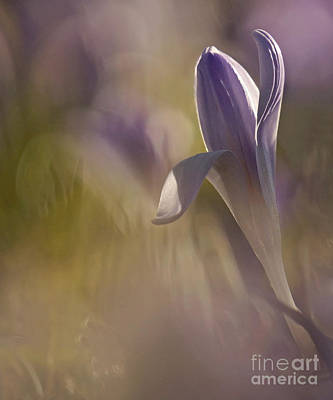 Finally  Spring Art Print by Inge Riis McDonald