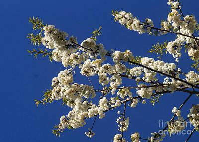 Photograph - Finally Spring by Rudi Prott