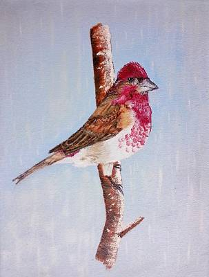 Painting - Finch by Valorie Cross