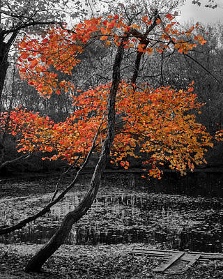 Photograph - Finding Autumn by Kirkodd Photography Of New England