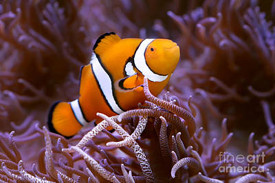 Photograph - Finding Nemo by Shannon Rogers