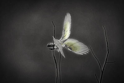Cockatoo Photograph - Fine Balancing Act by Douglas Barnard