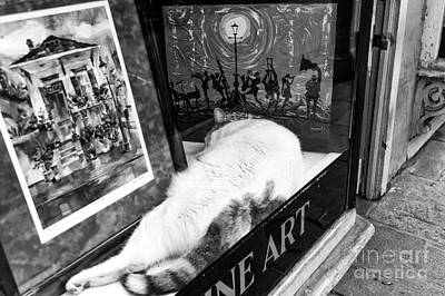 Photograph - Fine Cat Art Mono by John Rizzuto