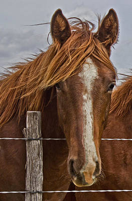 Fine Filly Art Print by Mamie Thornbrue