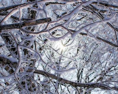 Fine Winter Mess Art Print by Cindi Snow
