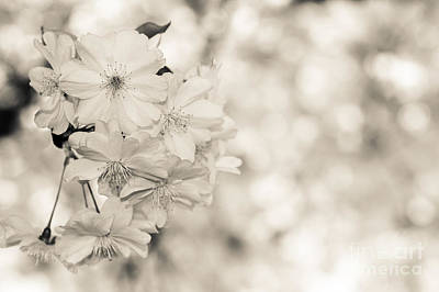 Finest Spring Time - Bw Art Print by Hannes Cmarits