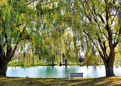 Finger Lakes Weeping Willows Art Print by Mitchell R Grosky