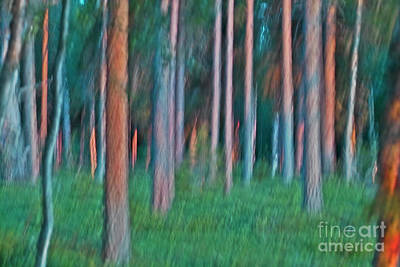 Woodscape Photograph - Finland Forest by Heiko Koehrer-Wagner