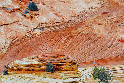 Photograph - Fins In Zion Canyon Np by Sharon I Williams