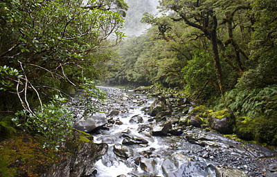 Fiordland National Park New Zealand Art Print