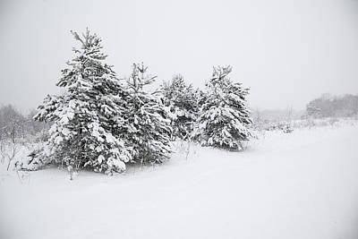 Fir Trees Covered By Snow Art Print
