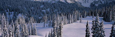 Snow-covered Landscape Photograph - Fir Trees, Mount Rainier National Park by Panoramic Images