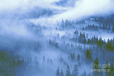 Photograph - Fir Trees Shrouded In Fog In Yosemite Valley by Dave Welling