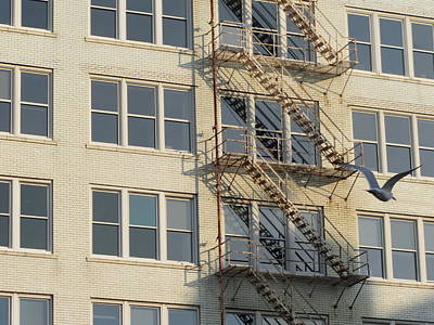 Photograph - Fire Escape And Bird by Anita Burgermeister