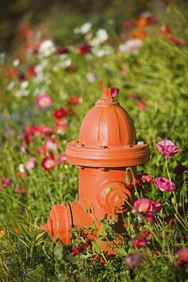 Fire Hydrant & Flowers Kodiak Island Art Print by Kevin Smith