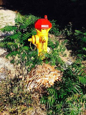 Photograph - Fire Hydrant Among The Ferns  by Richard W Linford